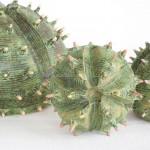 Cactusserie